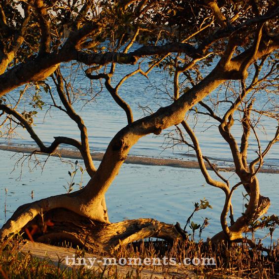 Bribie Mangroves